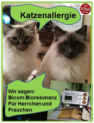 Bioresonanz und Katzenallergie