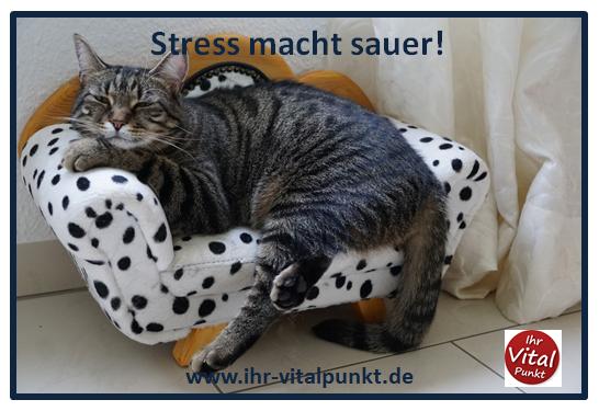 Stress macht sauer - Stoffwechsel blockiert durch Stress