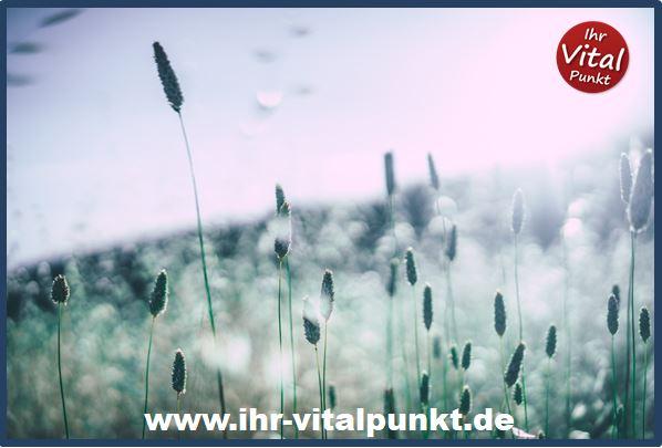 Pollenallergie und Bioresonanz, Heilpraxis Spandau
